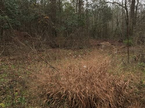 Beautiful Pasture And Hunting Land : Hartford : Geneva County : Alabama
