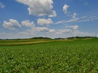 363 Acre Crop Farm : Somerset : Madison County : Virginia