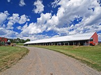365 Acre Cattle Farm : Somerset : Madison County : Virginia