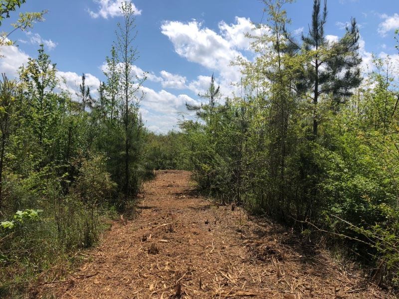 21.2 Acres/ Sauls Road/ Ruth/ Ms : Ruth : Lawrence County : Mississippi