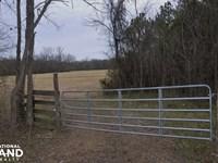 Pineywoods Road in Noxubee County : Macon : Noxubee County : Mississippi