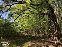Gardens Corner Small Estate Hwy 17 : Yemassee : Beaufort County : South Carolina