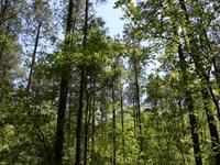 Rms 166 Tract : Forsyth : Monroe County : Georgia