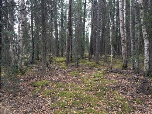 5.61 Acres of Recreational//Reside : Wasilla : Matanuska-Susitna Borough : Alaska