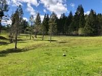 McCullough Creek 51 : Glendale : Douglas County : Oregon