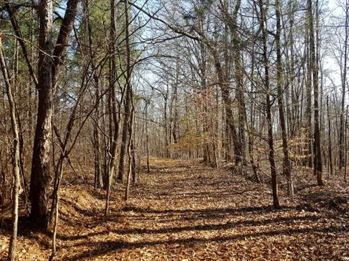 4349 Acres Well Managed Timberlands : Huron : Henderson County : Tennessee