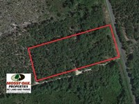 4 Acres of Hunting And Timber Land : Wagram : Scotland County : North Carolina