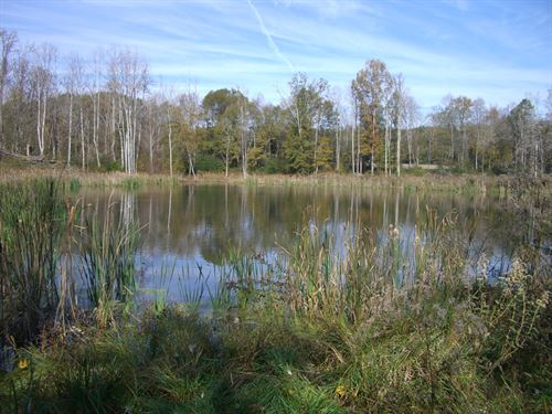 436.8 Acre Farm With Duck Hunting : Hollywood : Jackson County : Alabama