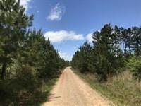 Little Cedar Creek Tract : Monticello : Jasper County : Georgia