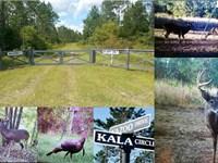 Kala Preserve : Crawfordville : Wakulla County : Florida