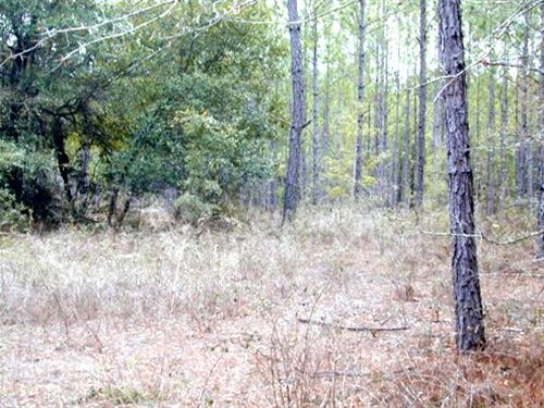 Big Creek 106 Ac : Hosford : Liberty County : Florida