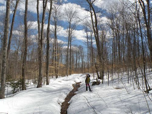 Herring Brook Forest : Moretown : Chittenden County : Vermont