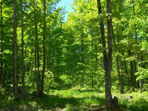Coles Creek Road, Lot 11 : Houghton : Michigan