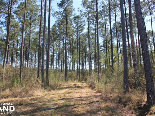 Shulerville 59 Acres : Shulerville : Berkeley County : South Carolina