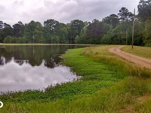 Country Home Site/Pasture Acreage : Terry : Hinds County : Mississippi
