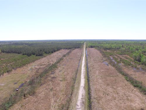 Timber Tract For Sale Pamlico Co. : Merritt : Pamlico County : North Carolina