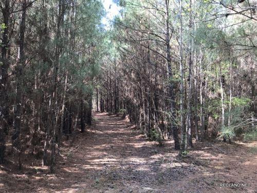 31 Ac - Pine Plantation Nearing 1st : Bernice : Union Parish : Louisiana