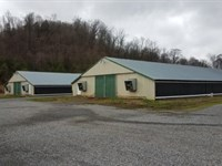 Poultry Farm In North Tennessee : Rogersville : Hawkins County : Tennessee