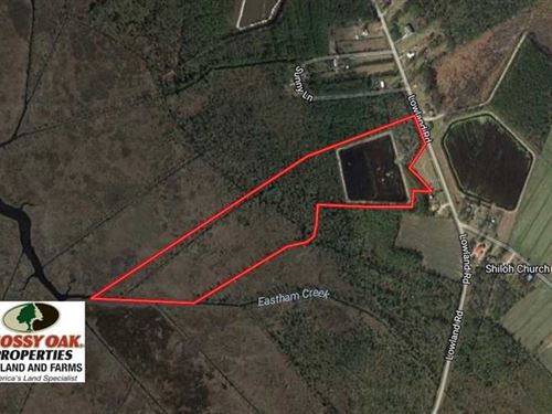 Under Contract, Duck Impoundment : Lowland : Pamlico County : North Carolina