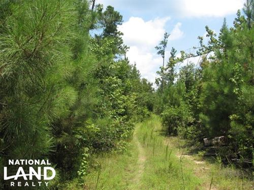 Hunting And Timber Investment in DE : De Kalb : Kemper County : Mississippi