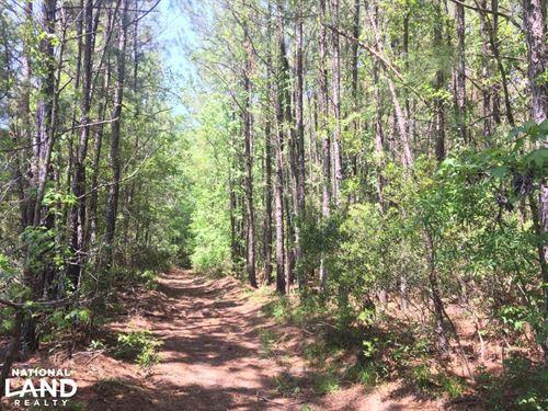 Black Creek 9 Acres : Summerville : Berkeley County : South Carolina