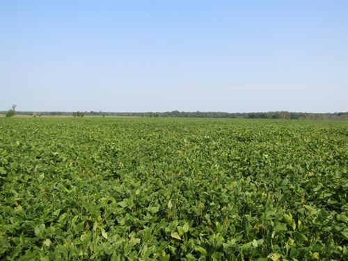 60 Acres In Monroe County In Prairi : Prairie : Monroe County : Mississippi