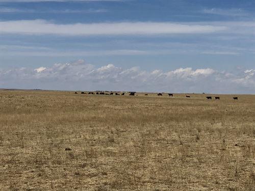 Yoder Brothers Ranch : Rush : El Paso County : Colorado