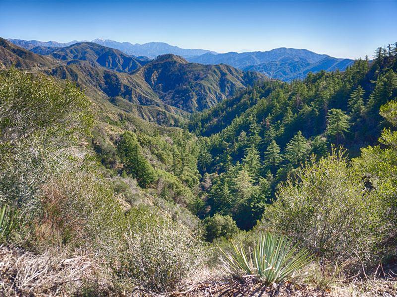 California Pines Lot In Modoc, CA : Alturas : Modoc County : California