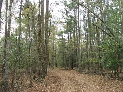 Cox Tract Large Merchantable Timber : Sycamore : Allendale County : South Carolina