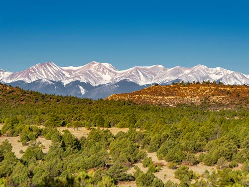 Wooded Mountain Homesite & Hunting : Trinidad : Las Animas County : Colorado
