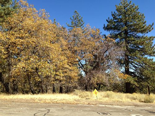 1.30 Acres Bvs, Kern County, Ca : Bear Valley Springs : Kern County : California