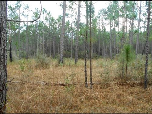 193.8 Acres In Stone County In Wigg : Wiggins : Stone County : Mississippi