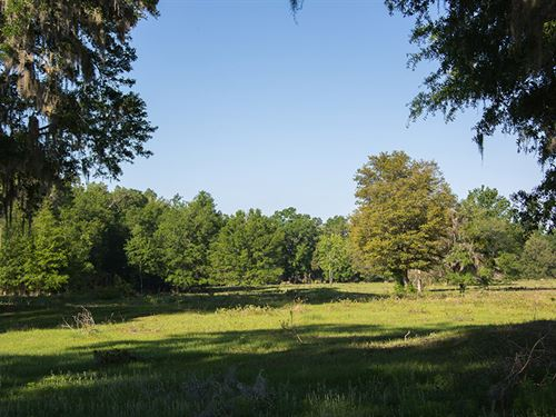Early Bird Ranch In Ocala, Florida : Ocala : Marion County : Florida