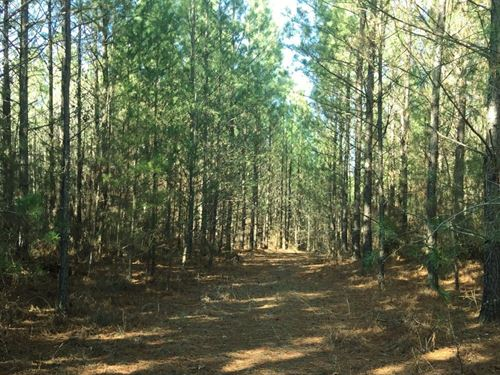 Jack Trail Point Hunting And Timber : Leighton : Colbert County : Alabama