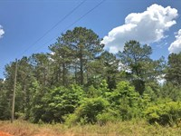 Bee Creek Tract : Luverne : Crenshaw County : Alabama