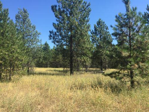 Bliss In Blanchard : Coeur D'alene : Bonner County : Idaho