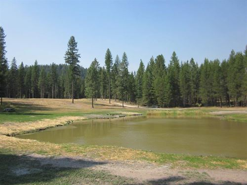 Stocked Trout Pond : Troy : Lincoln County : Montana
