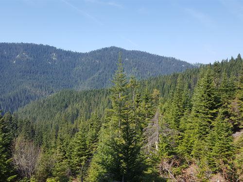 Cougar Mountain : Cataldo : Shoshone County : Idaho