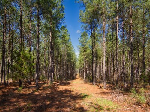 Hunting And Timberland Near Gaffney : Gaffney : Cherokee County : South Carolina