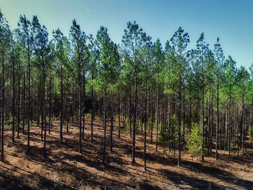 Nelson Road Tract : Laurens : South Carolina
