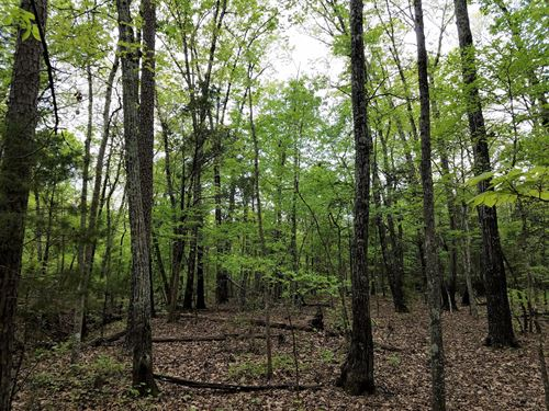 Goose Creek Tract : Donalds : Greenwood County : South Carolina