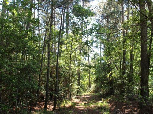 Tall Pines : Montgomery : Texas