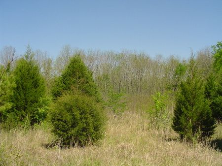 20.03 Acres - Great Home Site : Fitzpatrick : Bullock County : Alabama