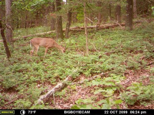 Roark Rd 15 : Eureka Springs : Carroll County : Arkansas