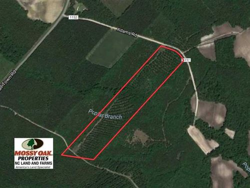 26.7 Acres of Hunting And Timber : Pink Hill : Jones County : North Carolina