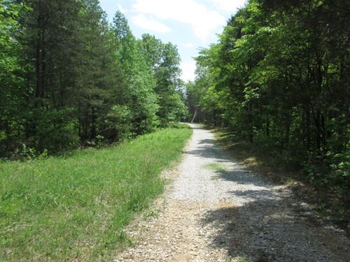 81 Wooded Acres In Hart County, Ky : Magnolia : Hart County : Kentucky