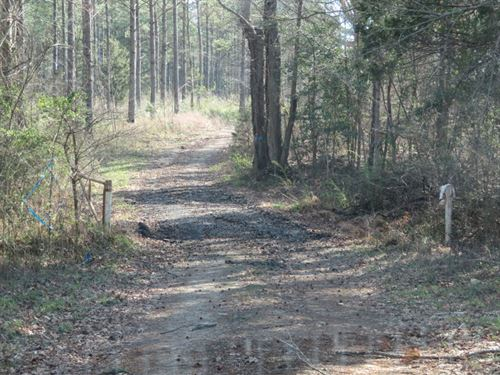 Rodgers Road Tract 13-1366 : Emporia : Greensville County : Virginia