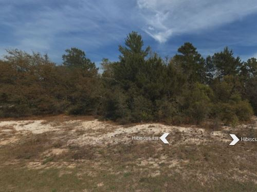 .17 Acres In Poinciana, FL : Poinciana : Polk County : Florida