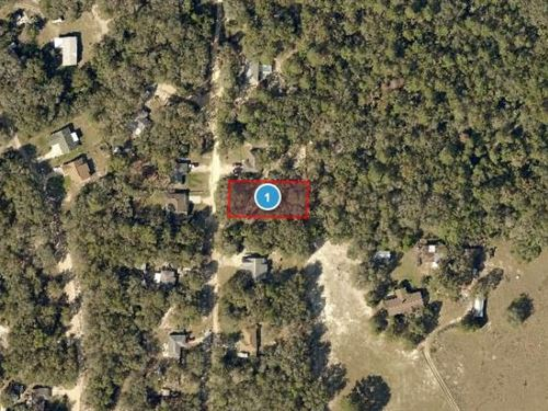 Lake County, Fl $24,500 Neg : Lady Lake : Lake County : Florida