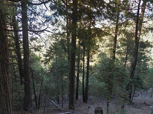 San Bernardino, Ca $11,000 Neg : Crestline : San Bernardino County : California